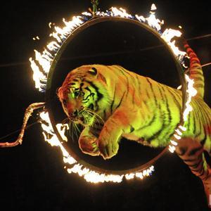 Цирки Тима