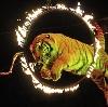 Цирки в Тиме