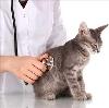 Ветеринарные клиники в Тиме
